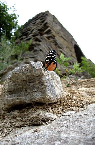 Butterfly and Mountain