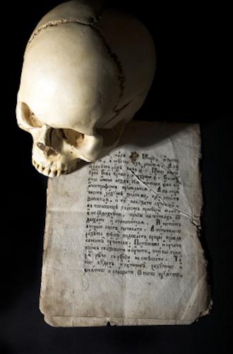 Skull_article
